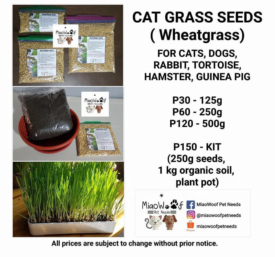 Wheat Grass Seeds / Kit for Cats, Dogs, Rabbit, Etc