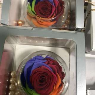 Everlasting rainbow rose Europe
