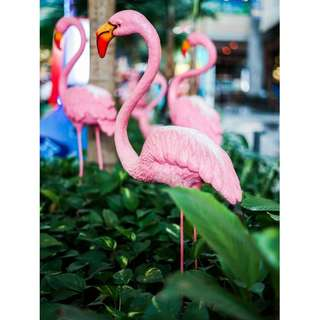 Assorted Fibreglass Flamingo