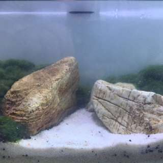 Aquascape fish tank