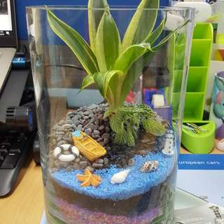 Terrarium (seaside garden)