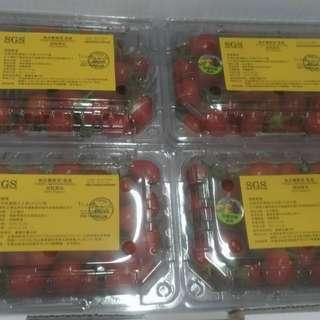 台灣玉女蕃茄(4入)