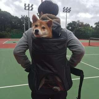 寵物後背包#中型犬#柴犬