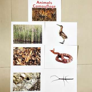 Animal Camouflage Flash cards / Shichida Heguru Right Brain Training Flashcards