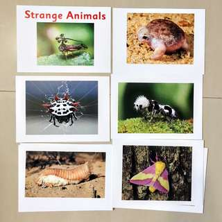 Strange Animals Flash cards / Shichida Heguru Right Brain Training Flashcards