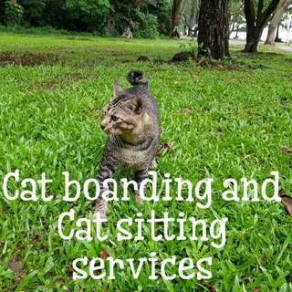 🐺🐱Cat boarding and Cat sitting services 🐺🐱