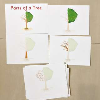 Parts of a Tree and Parts of a Trunk Flashcards Heguru/Shichida
