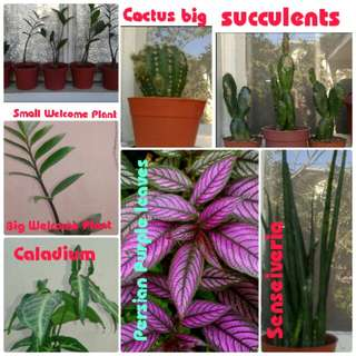 Set of Indoor Outdoor Plants