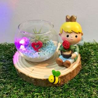 Little Prince with LED Lights Air Plant