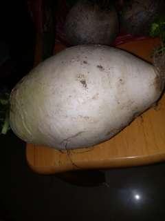 日本沖繩購 買 嘅種子 收成品 日本大蘿蔔