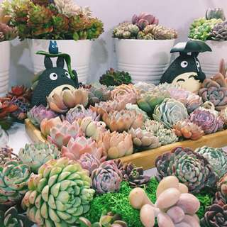 💐QUALITY RARE SUCCULENTS (HURRY ORDER NOW ON OUR ONLINE STORE)