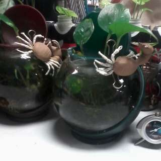 🚚 陶藝螃蟹(二手物,有磁鐵可吸附)