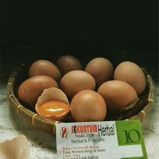 Telur herbal