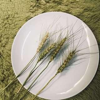 🚚 乾燥花 染色麥穗