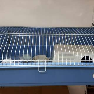 Guinea Pig Cages Large