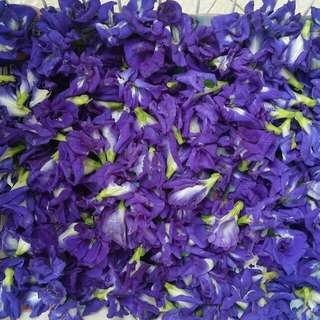 Organic Butterfly Pea Tea (Fresh/sun-dried)