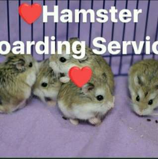 🐹 Dwarf hamster boarding service!! Book now!!