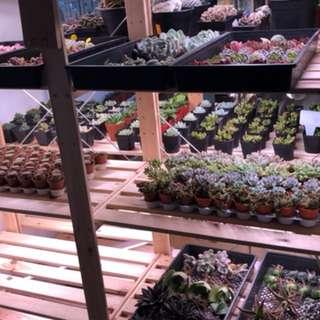 Succulents for sale at studio