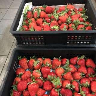 大湖草莓、自產自銷