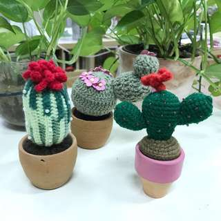 Set of 3 Hand knitted Crocheted Cactus display