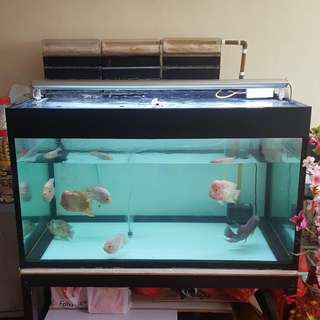 4 , 2.5 , 2.5 fish tank with stand