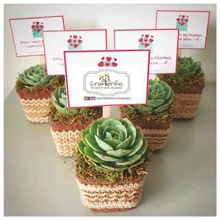 Real Cactus & Succulents Souvenirs | Giveaways