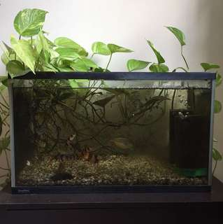 Aquarium Fish Tank 2 Ft