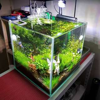 [Sharing] aquascaped cube tank