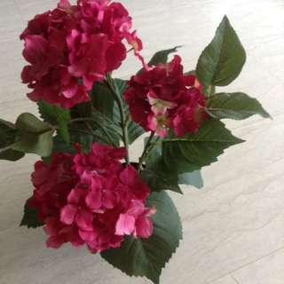 Sweden Flower