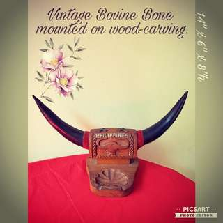 Vintage Philippines Bovine Horn Display. Large, refer to photo for dimensions. Good Condition. $15 Clearance Offer, sms 96337309.