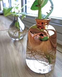 Water: Pot of Rose with Money Plant, Tabletop Palm