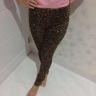 Mango Leopard Pants
