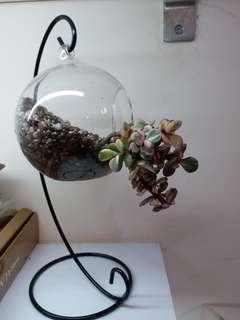 植物連玻璃球架全套