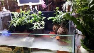 生態缸,造景魚缸