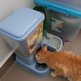Food and water dispenser and Pee wee system