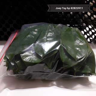 FRESH SOURSOP LEAVES 500g