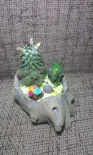 Blooming cactus terrarium