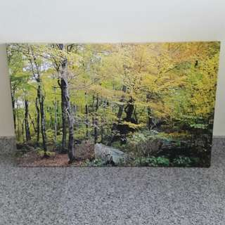 """Autumn Forest"" Print on Canvas"
