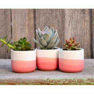 Set of Three Mini White Ceramic Coral Ombre Dip Dyed Planters