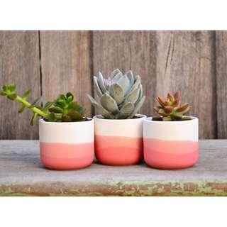 Set of Three Mini White Ceramic Coral Dip Dyed Planters