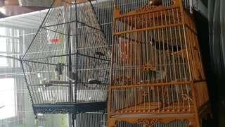 cage plastic
