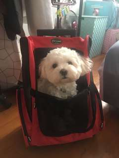 Pre-owned Pet Trolley