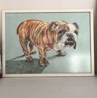 Portrait of bulldog