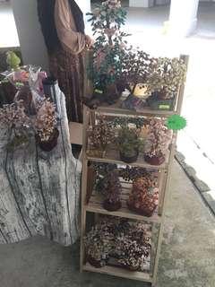 Crystal plants