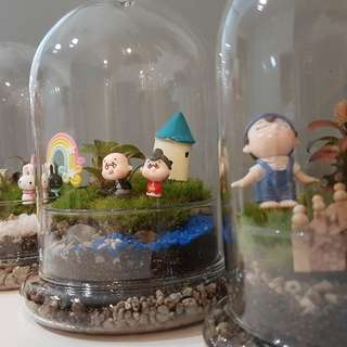 Terrarium (Ideal for gift)