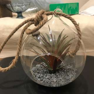 Round glass terrarium with rope detail