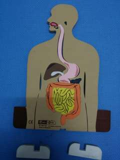 Human Digestive System Puzzle