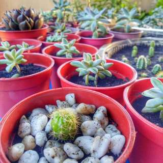 Succulents and Cactus for SALE!!