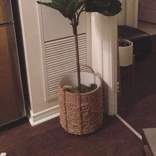 Custom Woven Basket Planter