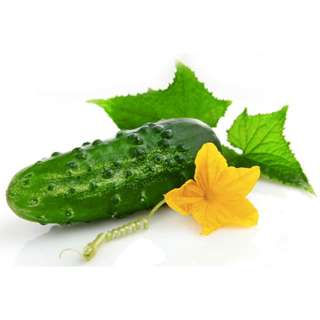 Organic Cucumber 'Marketmore' (Cucumis Sativus L.) Vegetable Plant Seeds, Medium Early Heirloom